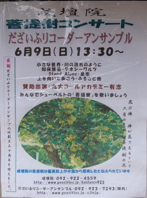 20130605菩提樹2_1_1.jpg