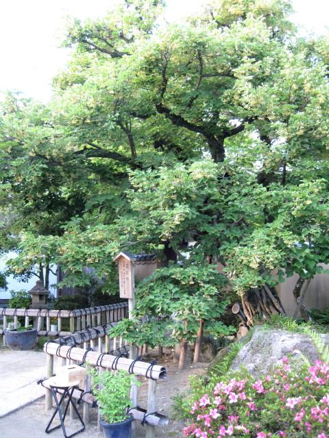 20130611菩提樹4_1_1.jpg