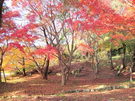 20141127竈門神社2.jpg