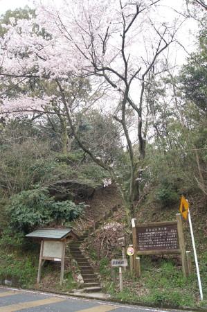 2014大野城跡桜3_1.jpg