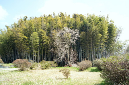 2014蔵司白木蓮_1.jpg