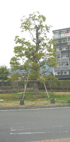 onigawara1.jpg