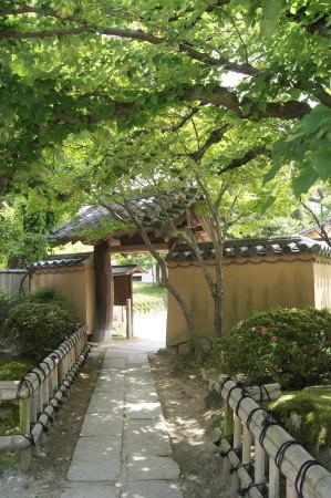 20130605菩提樹6_1.jpg