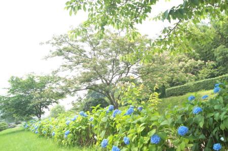 20140609蔵司_1_1.jpg