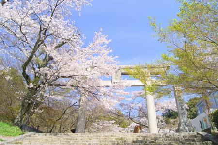 2014春竈門神社1_1.jpg