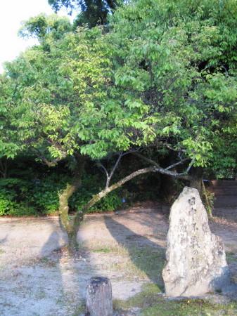 日中不戦の植樹2_1.jpg