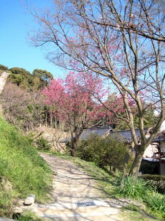 水城の春1_1.jpg