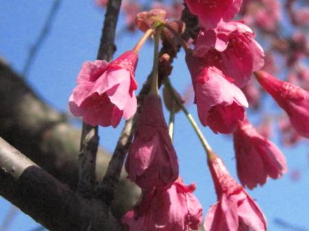 水城の春2_1.jpg