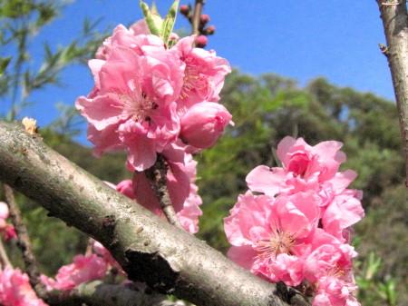 水城の春4_1.jpg
