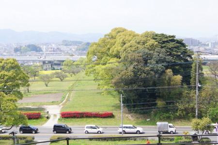 水城の赤いつつじ1_1.jpg