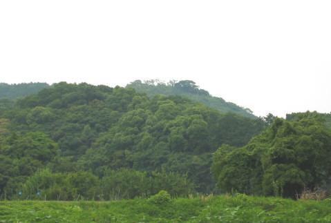 iwayajoshi.jpg