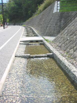 kokuhakudori5.jpg