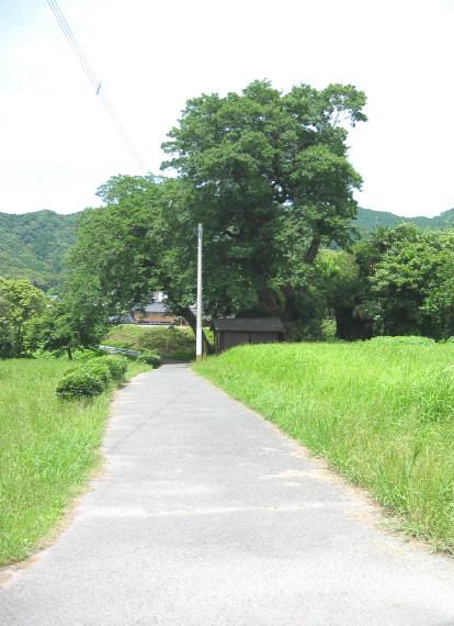 mukunoki8.jpg