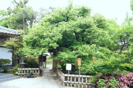 2011.5.31 菩提樹2_1.jpg
