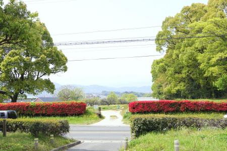 水城の赤いつつじ2_1.jpg